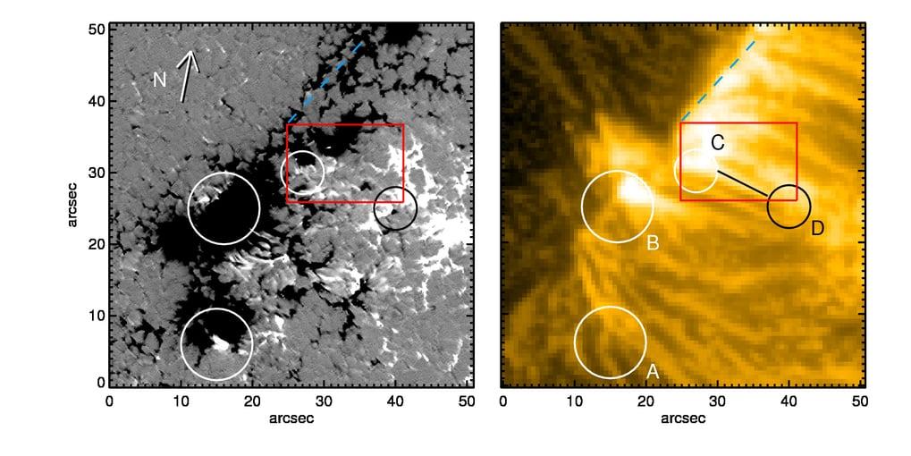 Ein Blick auf die Entstehungsorte koronaler Bögen. Aufnahmen der NASA-Sonde Solar Dynamics Observatory (rechts) vom 12. Juni 2013 zeigen ausgeprägte Plasmaflüsse in der Korona der Sonne. Sunrise II-Daten dokumentieren die Magnetfelder, die zum selben Zeitpunkt und an derselben Stelle auf der Sonne herrschten (links). Als Ausgangspunkte der koronalen Bögen (hier angedeutet durch Kreise) entpuppen sich kleine Bereiche, in denen die magnetische Polarität der ihrer überwiegenden Umgebung entgegengesetzt ist. © MPS/SDO