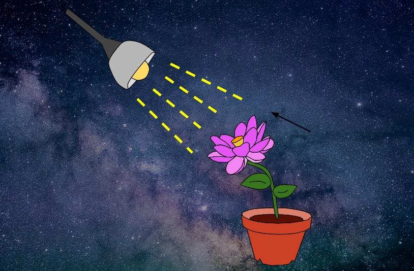 Kann man im Weltraum Gemüse züchten? 3