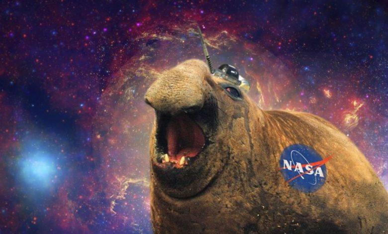 Was haben See-Elefanten mit der NASA zu tun? 5