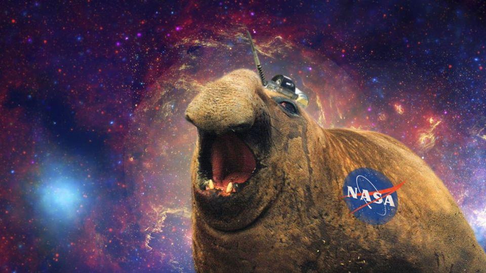 Was haben See-Elefanten mit der NASA zu tun? 1